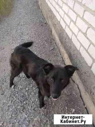 Найден пёс Шадринск
