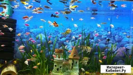Продажа аквариумных рыбкок Чебоксары