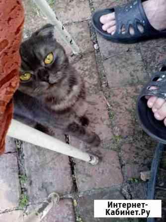 Отдам кошку в добрые руки Томск