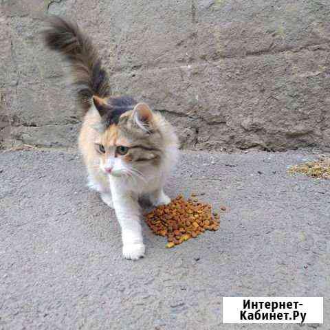 Кошка Ростов-на-Дону