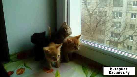 Котята в добрые руки Волжский Волгоградской области