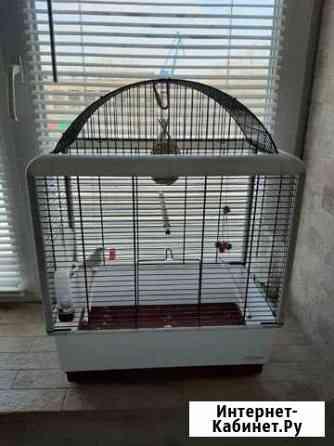 Продам птичку амадина с клеткой Красноярск