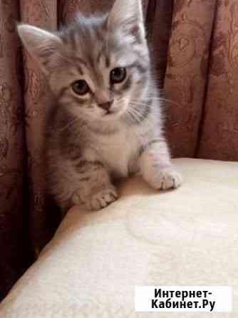 Кошка Ижевск