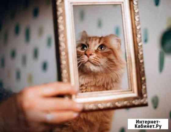Отдам котёнка даром Хабаровск