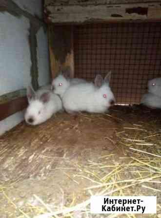Кролик Курск