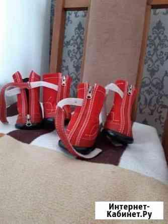 Обувь для собаки Омск