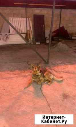 Собака дворняжка Саранск