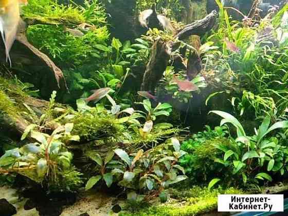 Растения в аквариум Энгельс