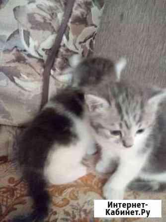 2 котеночка ищут хозяев Орёл