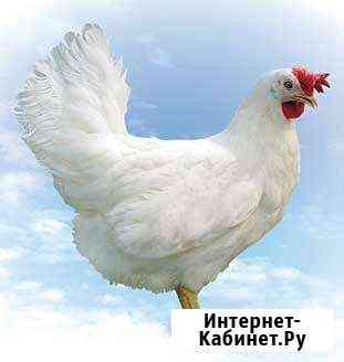 Куры Томск
