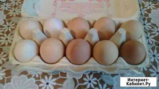 Яйцо инкубационное Смоленск