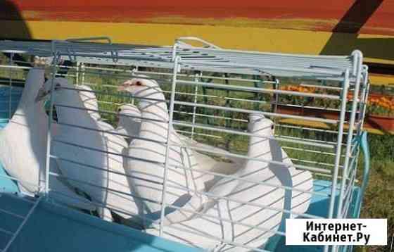 Белые голуби для свадеб Москва