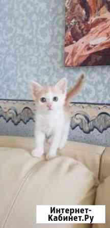 Отдам котика в добрые руки Саранск