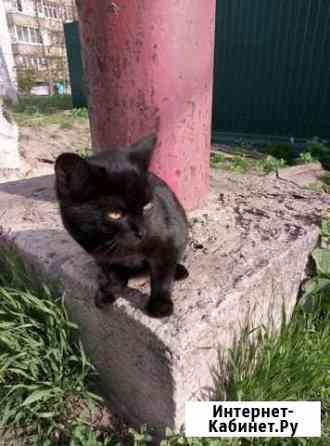 Кошечка Котовск