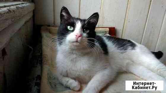 Стерилизованая кошка Чебоксары