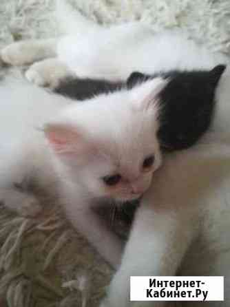 Кошка Чебоксары