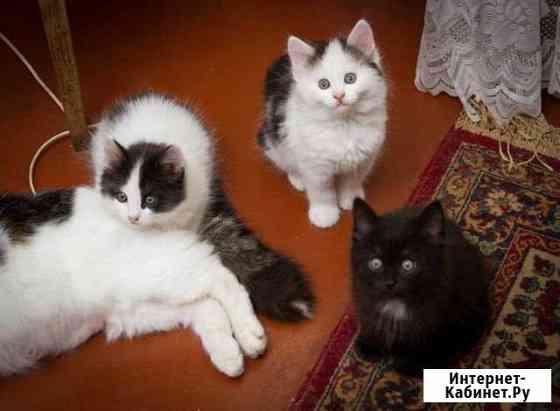 Котята в добрые руки Рязань