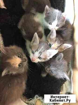 Котятки-сироты ищут дом Рязань