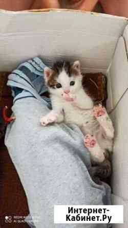 Кошка Оренбург