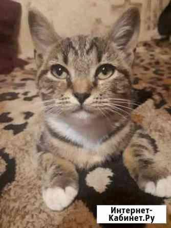 Кошка Благовещенск