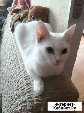 Кошечка в добрые руки Смоленск
