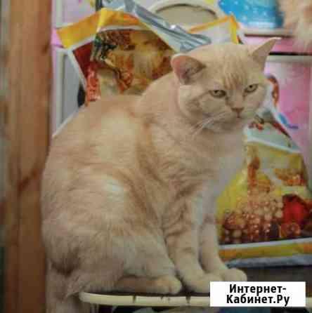 Кошечка Габи ищет дом Тольятти
