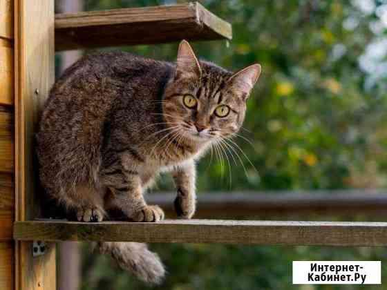 Кошка Глория ждёт хозяев Калуга