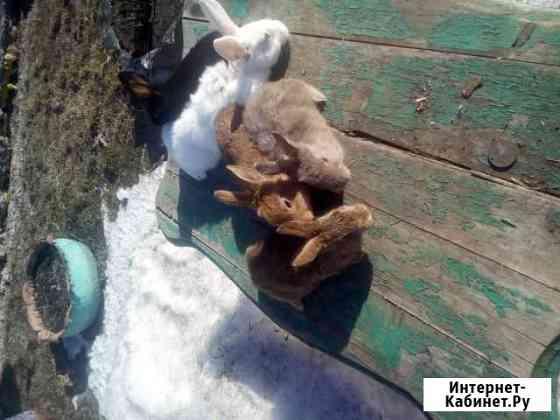 Кролики Усть-Тарка