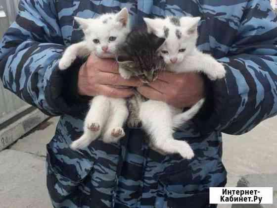 Котята Тверь
