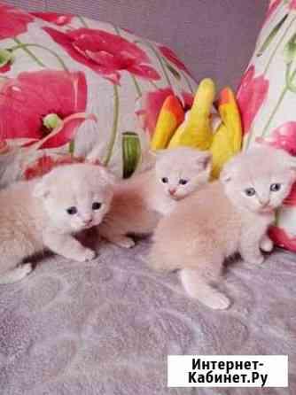Кошка Северодвинск