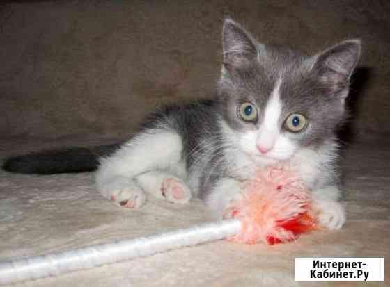 Красивый котенок в заботливые руки Тюмень