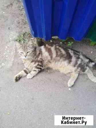 Молодой котик Липецк