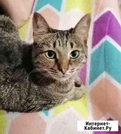 Кошка Алиса ищет своего Человека Ульяновск