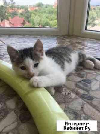 Котёнок-девочка в добрые руки Калининград