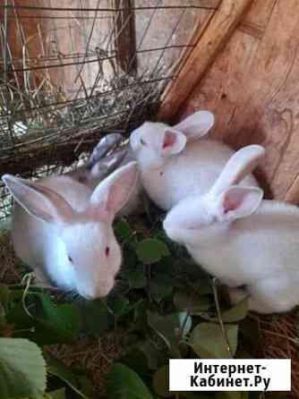 Кролик Брянск