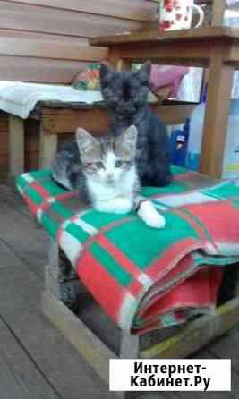 Отдам котят в хорошие руки Смоленск