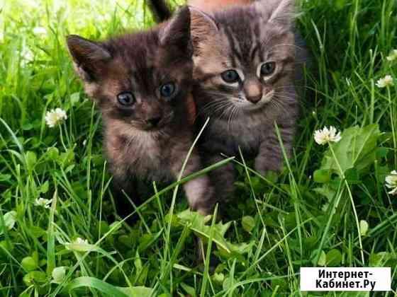 Кошка Брянск