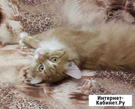 Яркий котенок 7 мес.кастрированный Кемерово