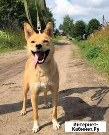 Очень добрая собака улыбака Иваново