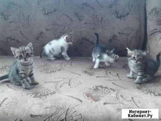 Котята Полысаево