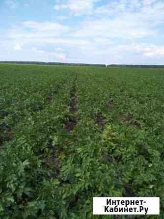 Картофельный бизнес(сельхозпредприятие) Екатеринбург