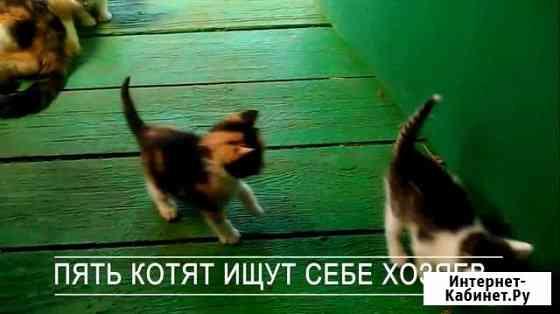 Котята в добрые руки бесплатно Владимир