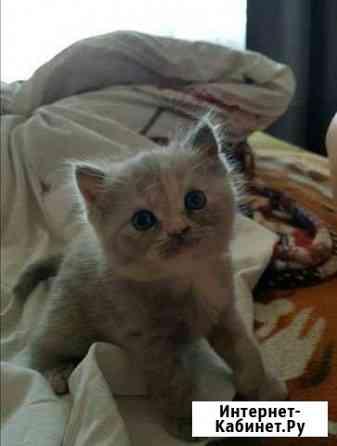 Продам котенка Томск