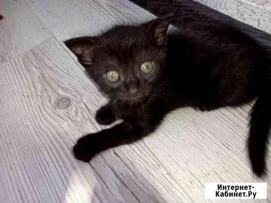 Кошка серая,кот черный Ростов-на-Дону