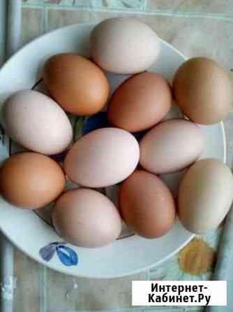 Яйца от домашних кур молодок, цена за десяток Липецк
