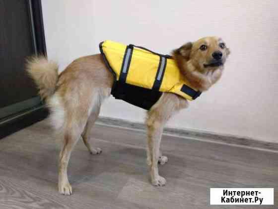 Спасательный жилет для собаки Мурманск
