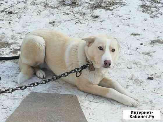 Собака молодая мальчик бесплатно Екатеринбург
