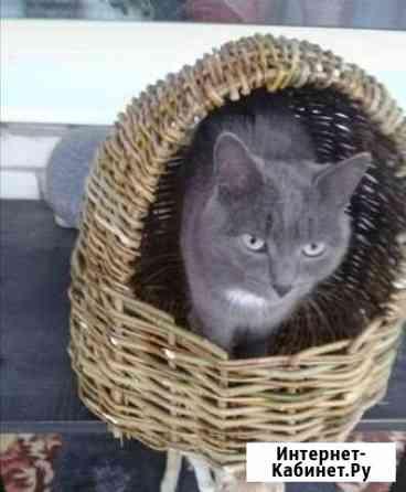 Отдам кота Нежинка