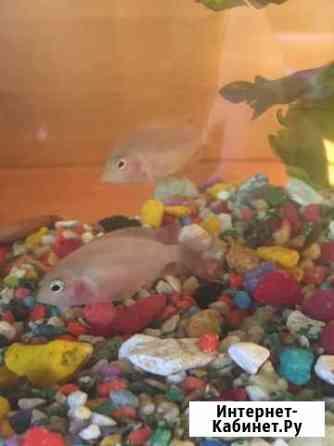 Рыба Тюмень