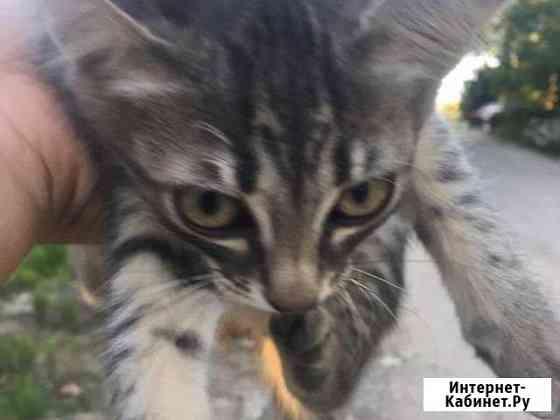 Кошка Симферополь